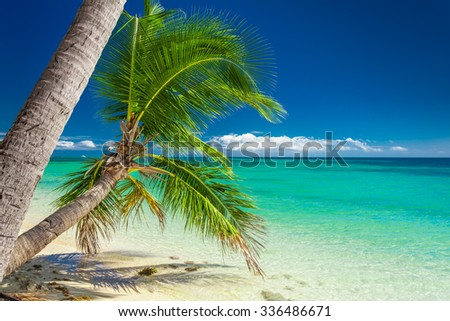 Detail of a palm trees on a vibrant colorful beach in Fiji - stock photo