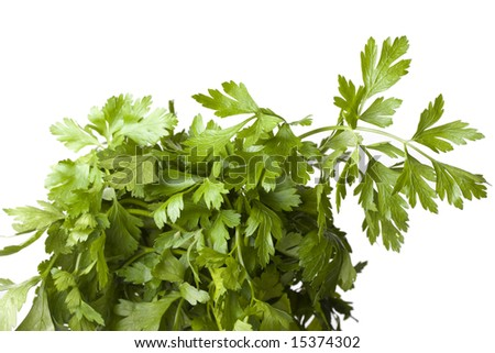 detail of a parsley plant