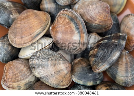 Detail of a raw clams - stock photo