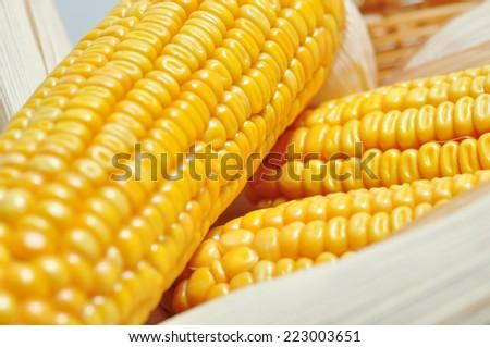 detail of a ripe corncob - stock photo