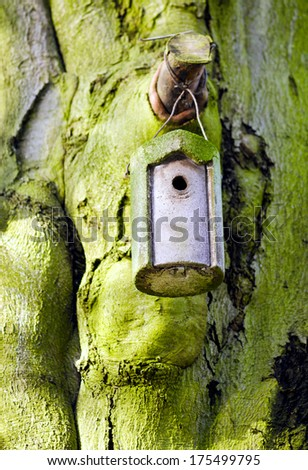 Detail of a small birdhouse pinned on a tree trunk of an ancient and mossy beech tree.  - stock photo