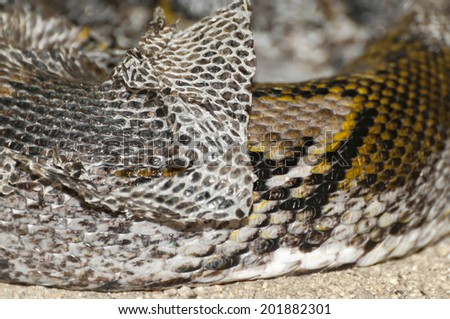 Detail of a snake changing skin - stock photo