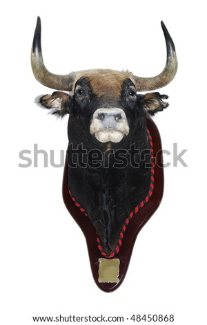 detail of a stuffed head of a bull isolated on a white background - stock photo
