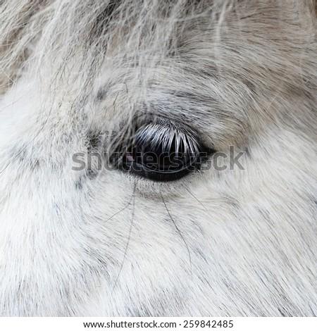Detail of a white horse'e eye - stock photo