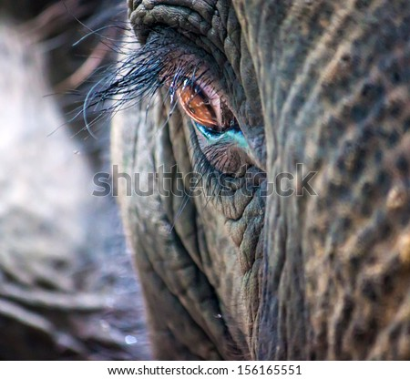 Detail of an elephant's eye, Thailand - stock photo