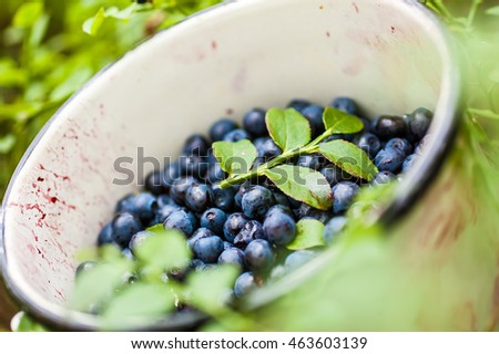 Detail of an old-fashioned tin full of ripe blueberries/bilberries.