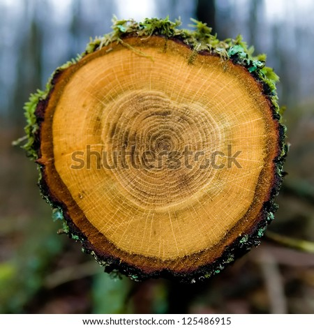 Detail of annual rings of a tree trunk in the forest. - stock photo
