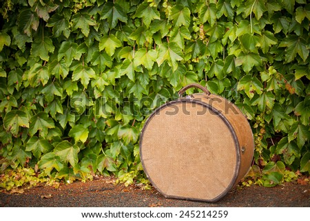 Detail of antique hat case sitting on ground in front of lush green vine - stock photo