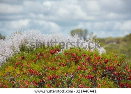 detail of australia bush flowers - stock photo