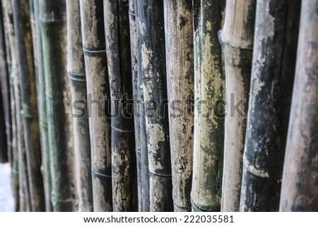 Detail of bamboo texture  - stock photo