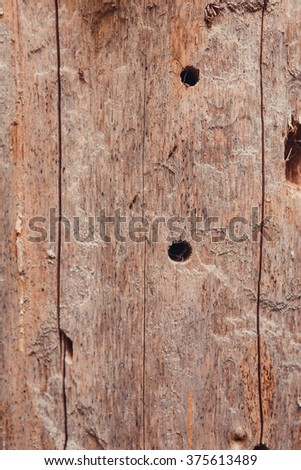detail of bark from the trunk of an old dead fir - stock photo