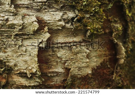 Detail of bark of tree at Exmoor - stock photo
