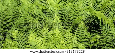 detail of beautiful green fern in nature - stock photo