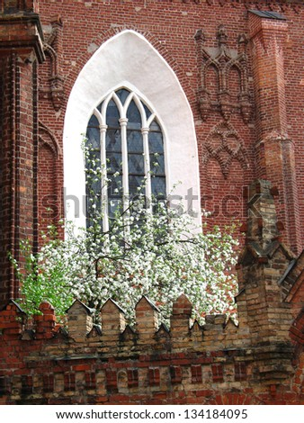 detail of Bernardine church in Vilnius, Gothic window with blooming apple-tree