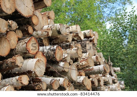 Detail of birch logs piled up in green forest. - stock photo