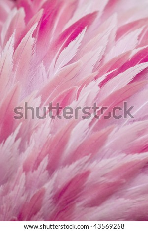 Detail of Bird Feathers - stock photo
