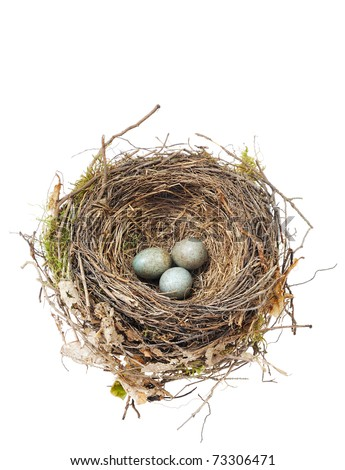 Detail of blackbird eggs in nest isolated on white - stock photo