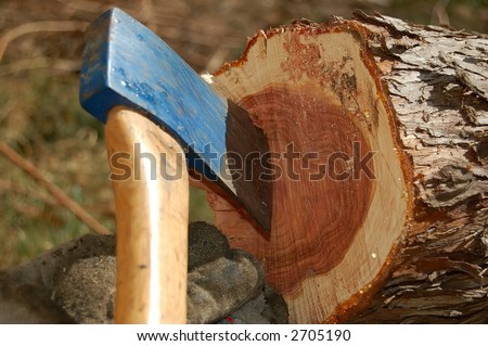 Detail of blue axe in cut down tree - stock photo