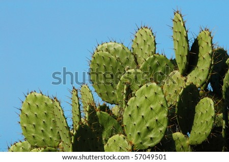 Detail of cactus growing in  Puerto Escondido - stock photo