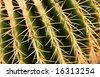 Detail of Cactuses in Museo de cactuses, Lanzarote island, Spain Echinocactus grusonii (Golden Barrel Cactus, Mother-in-Law's Cushion ) - stock photo