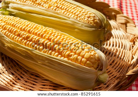 Detail of Corn Cobs in Basket on Red Gingham Tablecloth in Sunlight