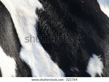 Detail of  cow skin
