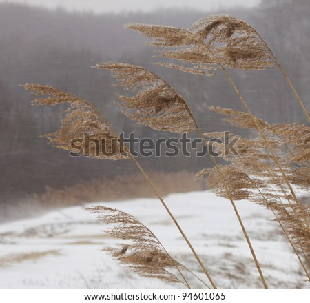 Detail of crops bending on wind - stock photo