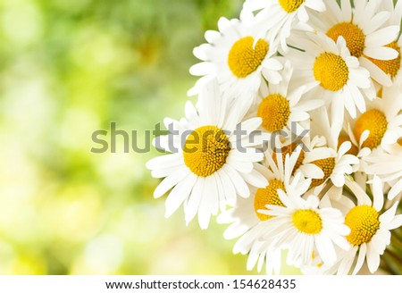 detail of daisy flower with shallow focus