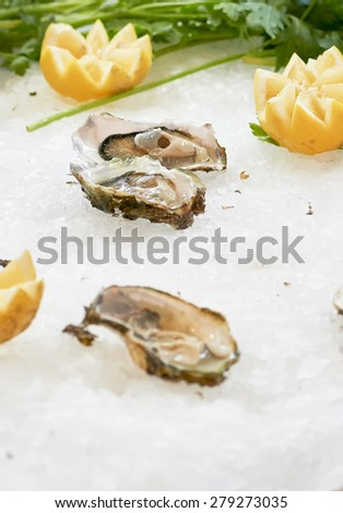 detail of delicious oysters in a market in italy - stock photo