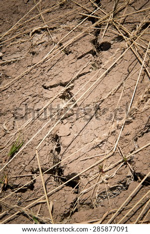 detail of dry soil with dry plants - stock photo