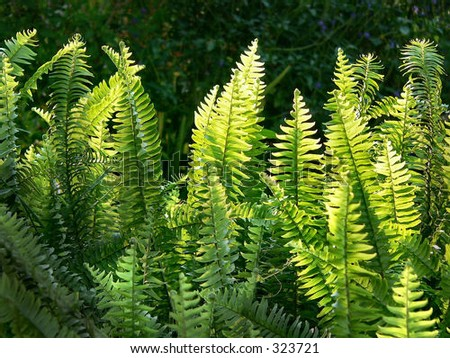 detail of ferns in sunlight