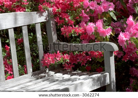 Detail of Garden bench and azalea flowers