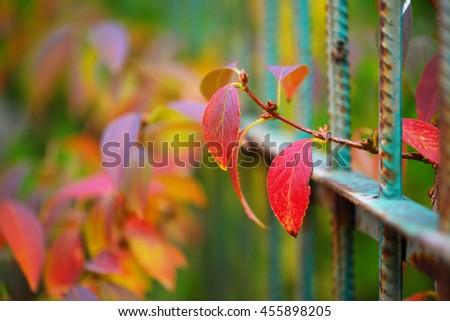 Detail of garden fence with colorful vegetation in Autumn season. - stock photo