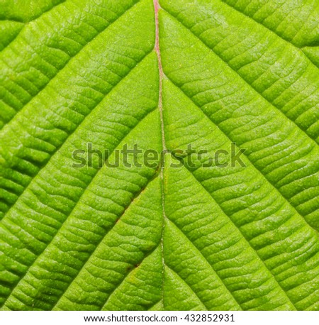 Detail of green leaf macro texture close up background. - stock photo