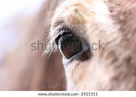 Detail of horse - stock photo