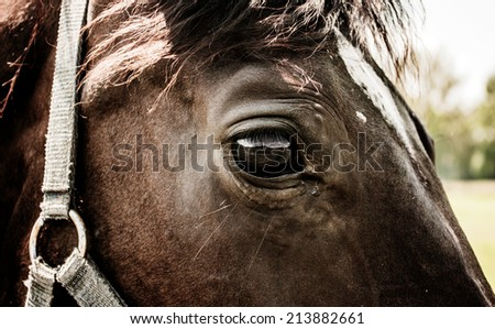 Detail of  horse head with dark fur and black eye - stock photo