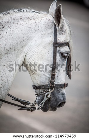 detail of horse head with leather and steel rein - stock photo