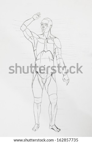 anatomical drawing stock photos  images   u0026 pictures