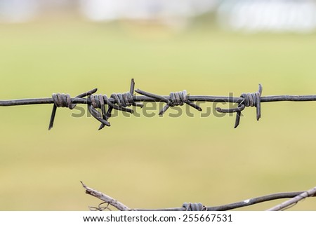 Detail of iron barbed wire used as a fence to close a field of green grass - stock photo