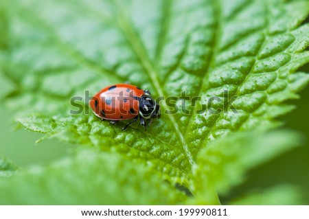 Detail of ladybug macro over green leaf background - stock photo