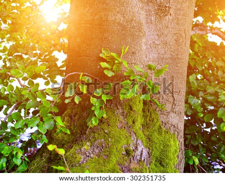 Detail of mighty oak tree in summer time - stock photo