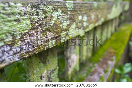 detail of moss and lichen on wooden fence