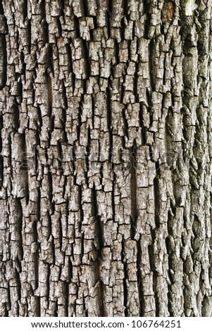 Detail of oak tree bark - stock photo