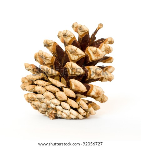 Detail of one pine cone on a white background