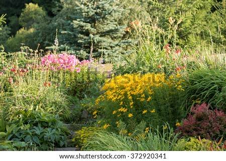 detail of organic countryside british garden with blooming colorful coreopsis and hellebores - stock photo
