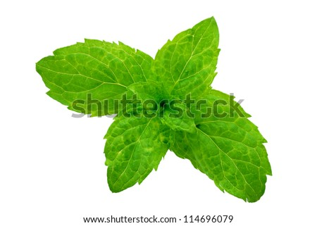 detail of outbreaks of mint leaf isolated and clipping path - stock photo