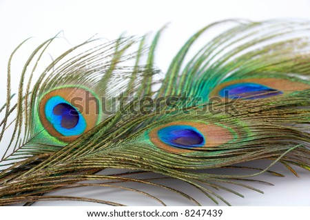 detail of peacock feather as colorful background