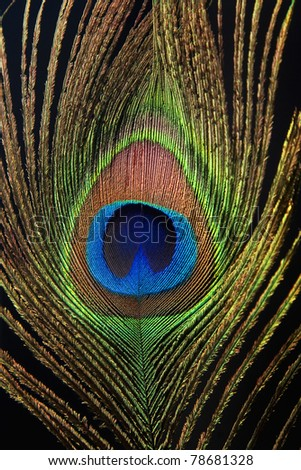 Detail of peacock feather eye on black background - stock photo