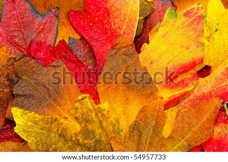 Detail of pile of dry autumn leaves