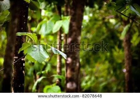 Detail of rich green forest leaves with blurred background